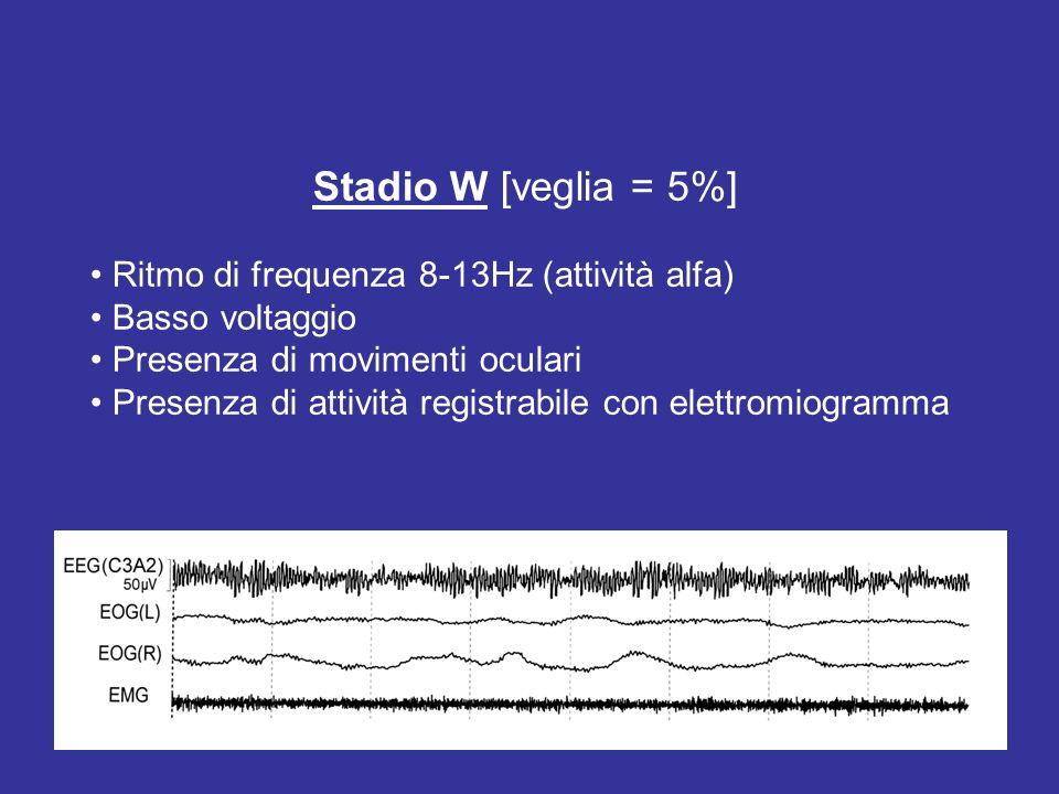 Stadio W [veglia = 5%] • Ritmo di frequenza 8-13Hz (attività alfa)